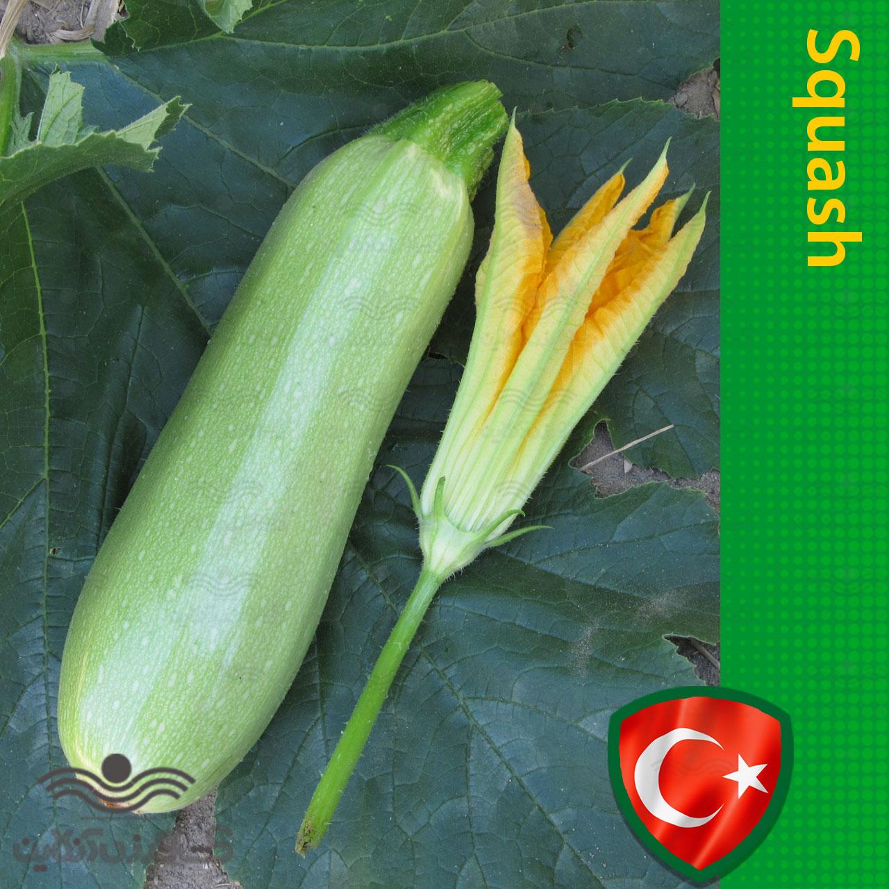 بذر کدو خورشتی ترک