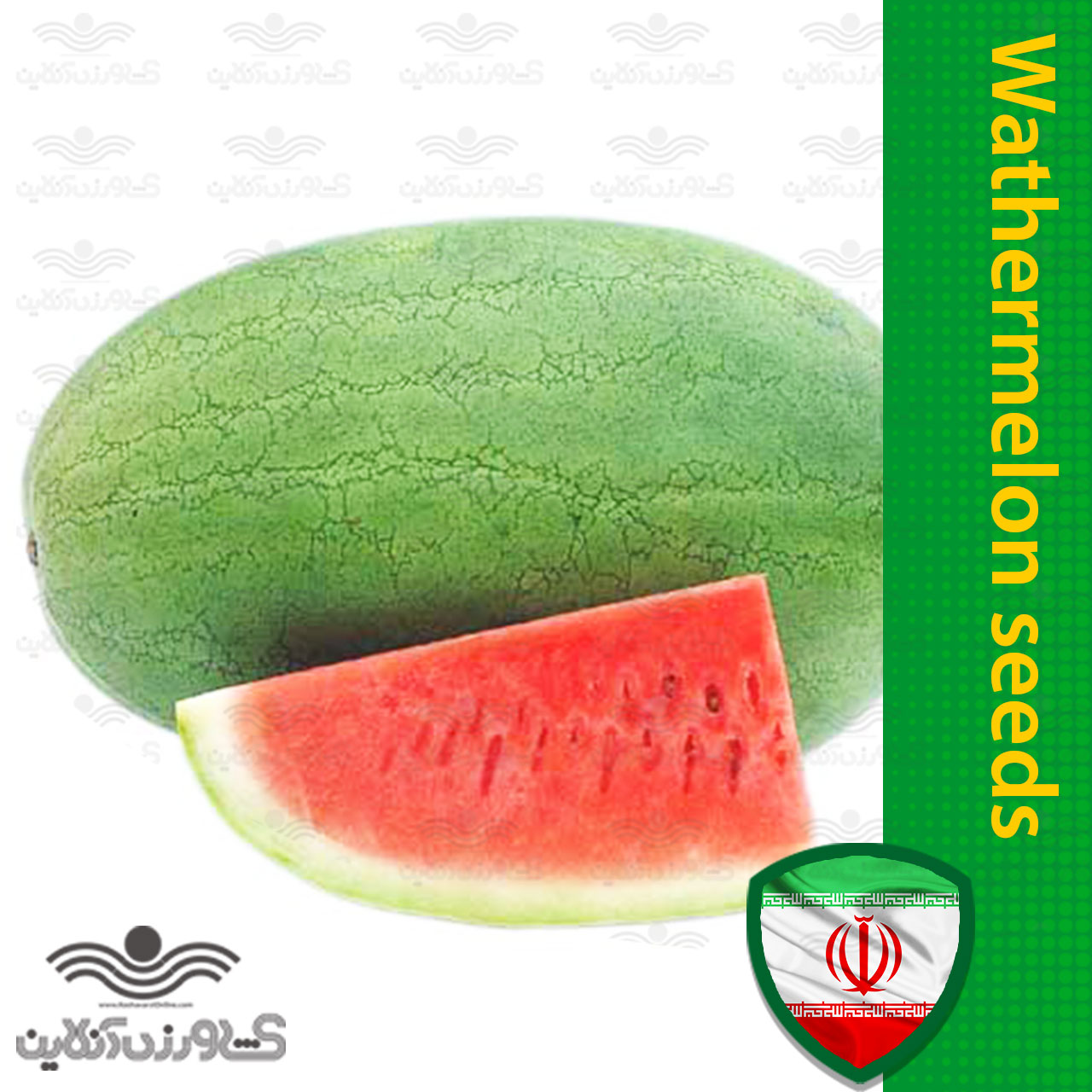 بذر هندوانه سفید بزرگ