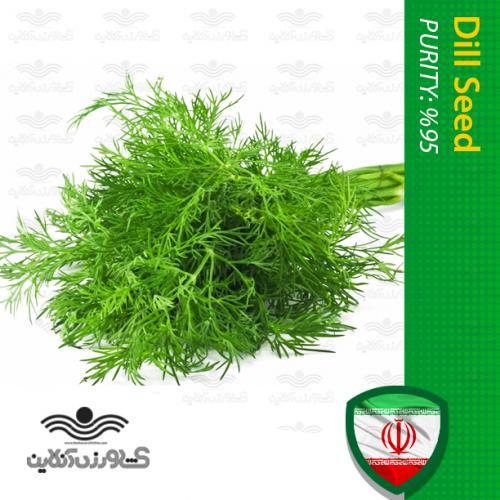 بذر سبزی شوید