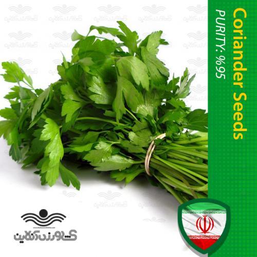 بذر سبزی گشنیز