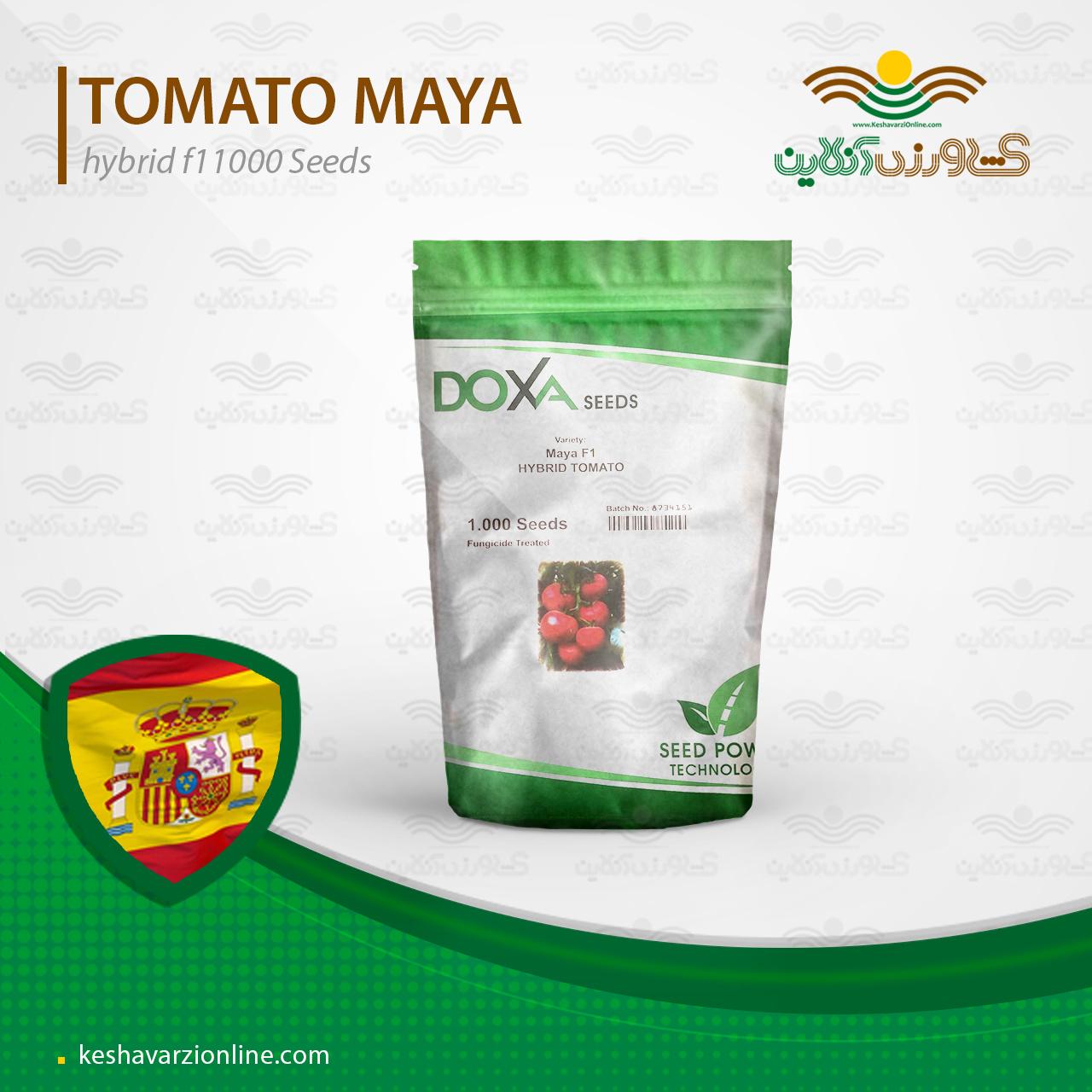 بذر گوجه فرنگی گلخانه ای مایا پربار و مقاوم به شوری