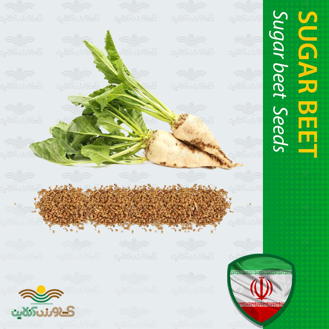 بذر چغندر قند و روش کاشت