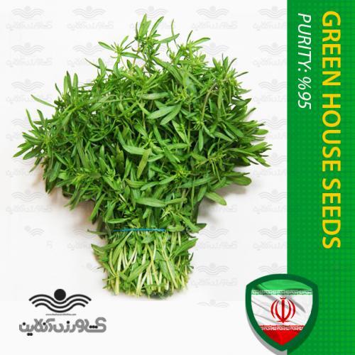 بذر سبزی مرزه