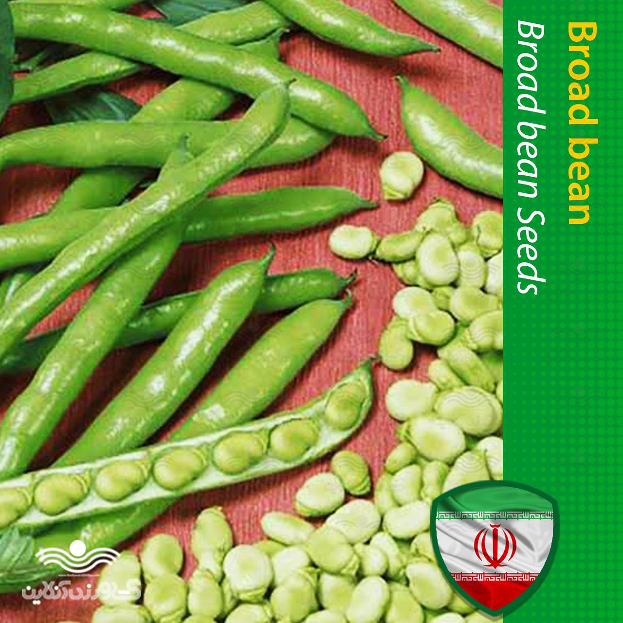 بذر باقلا ریز مینیاتوری و روش کاشت باقلا