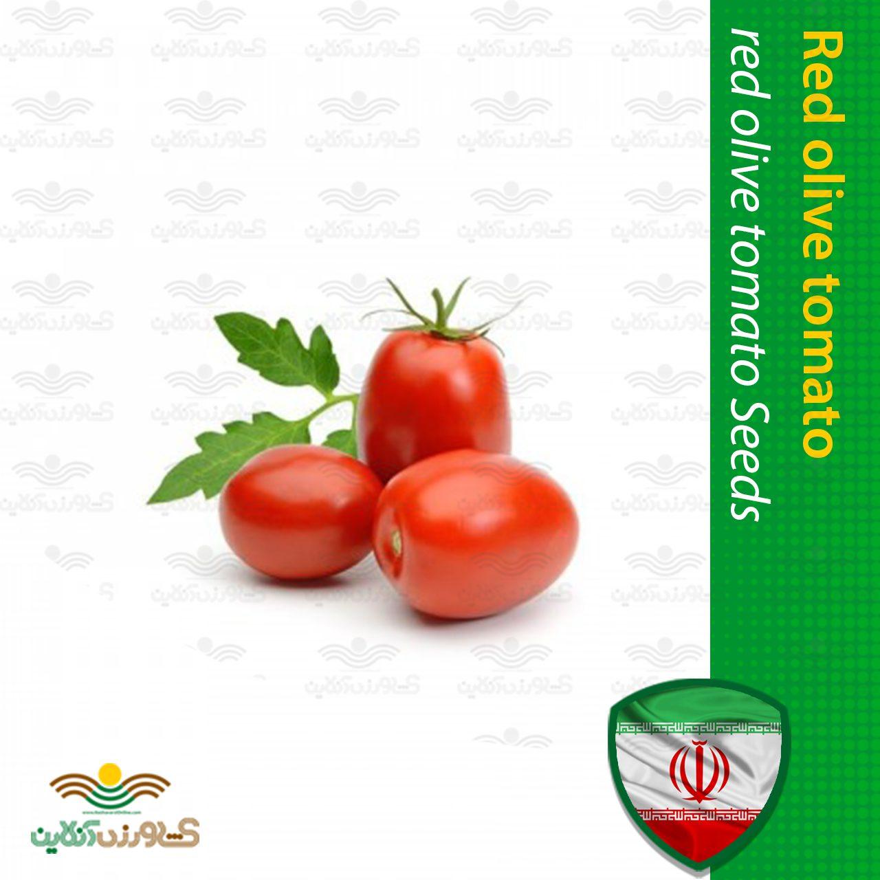 بذر گوجه زیتونی قرمز خانگی