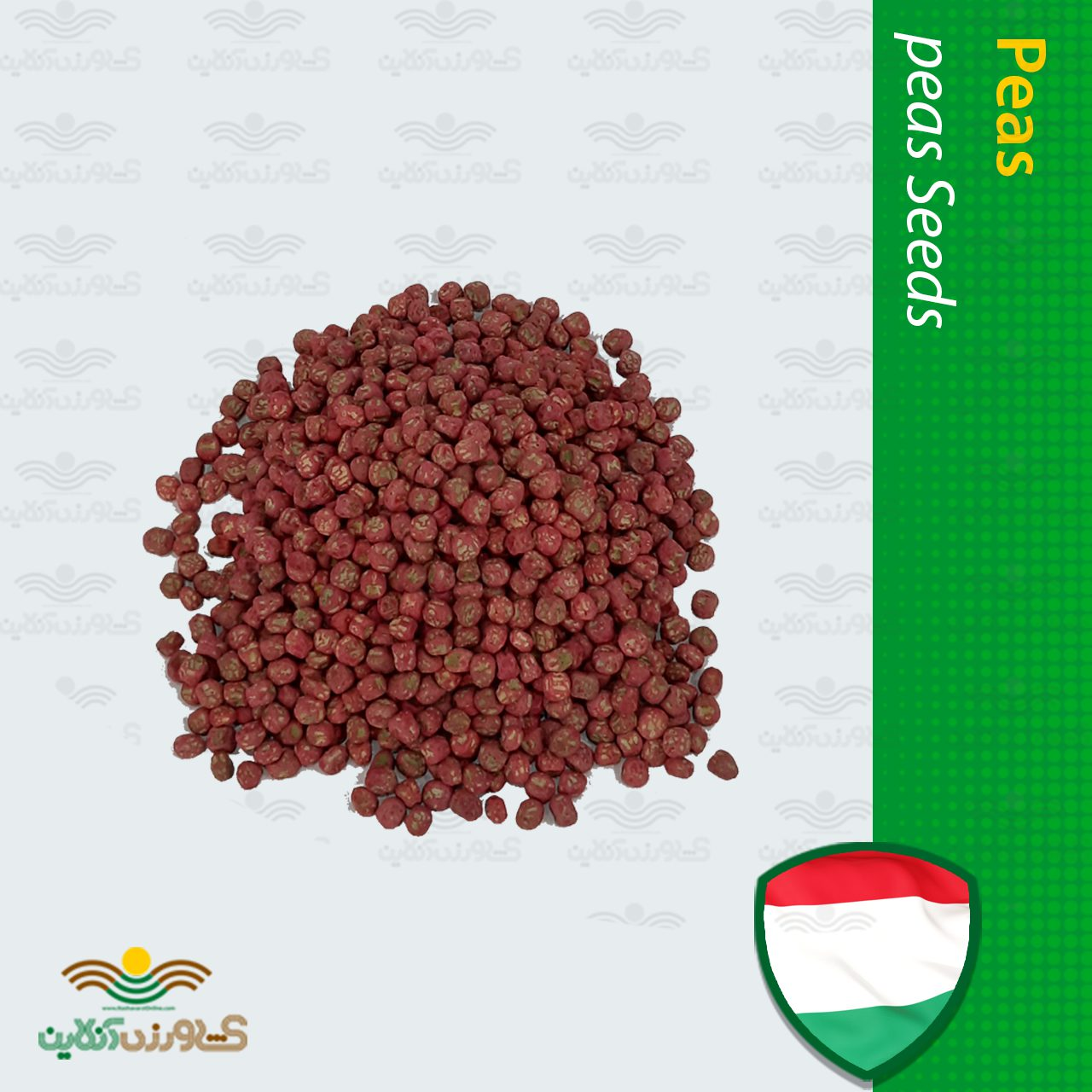 بذر نخود فرنگی شمشیری مجارستانی