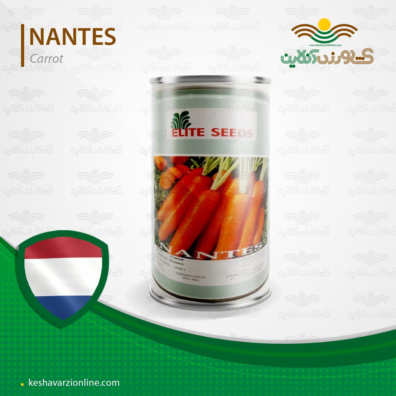 بذر هویج نانتس الیت آمریکایی