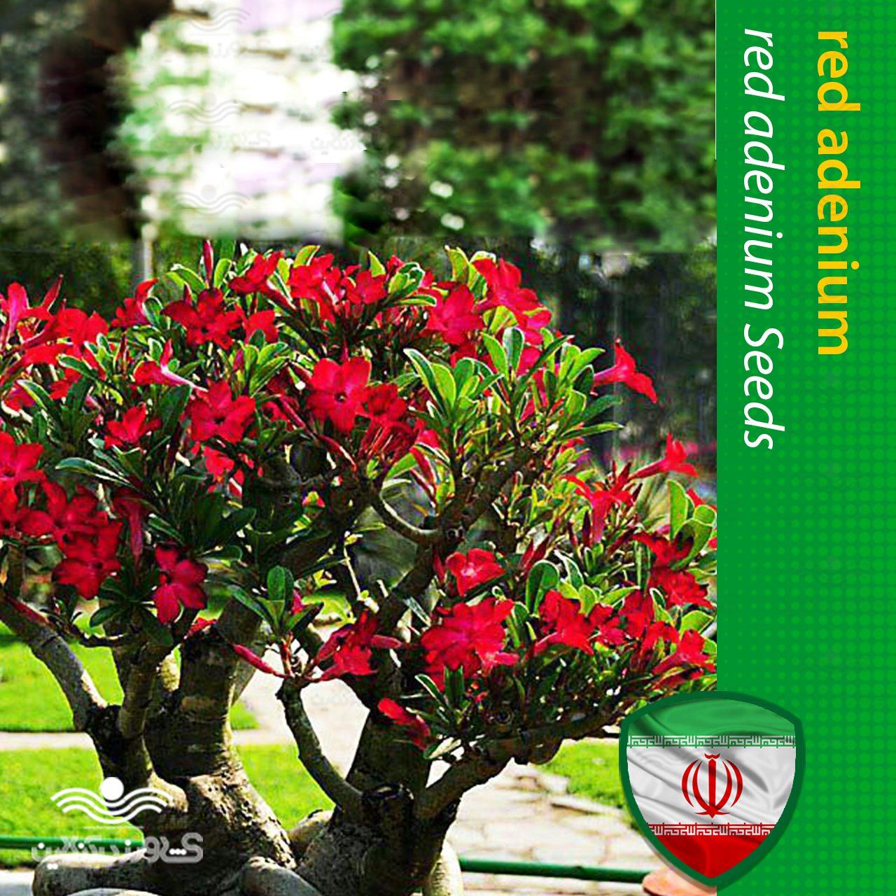 بذر آدنیوم قرمز و روش تکثیر و نگهداری آدنیوم