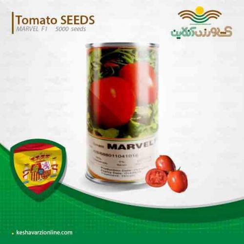 بذر گوجه پرمحصول مارول اسپانیا