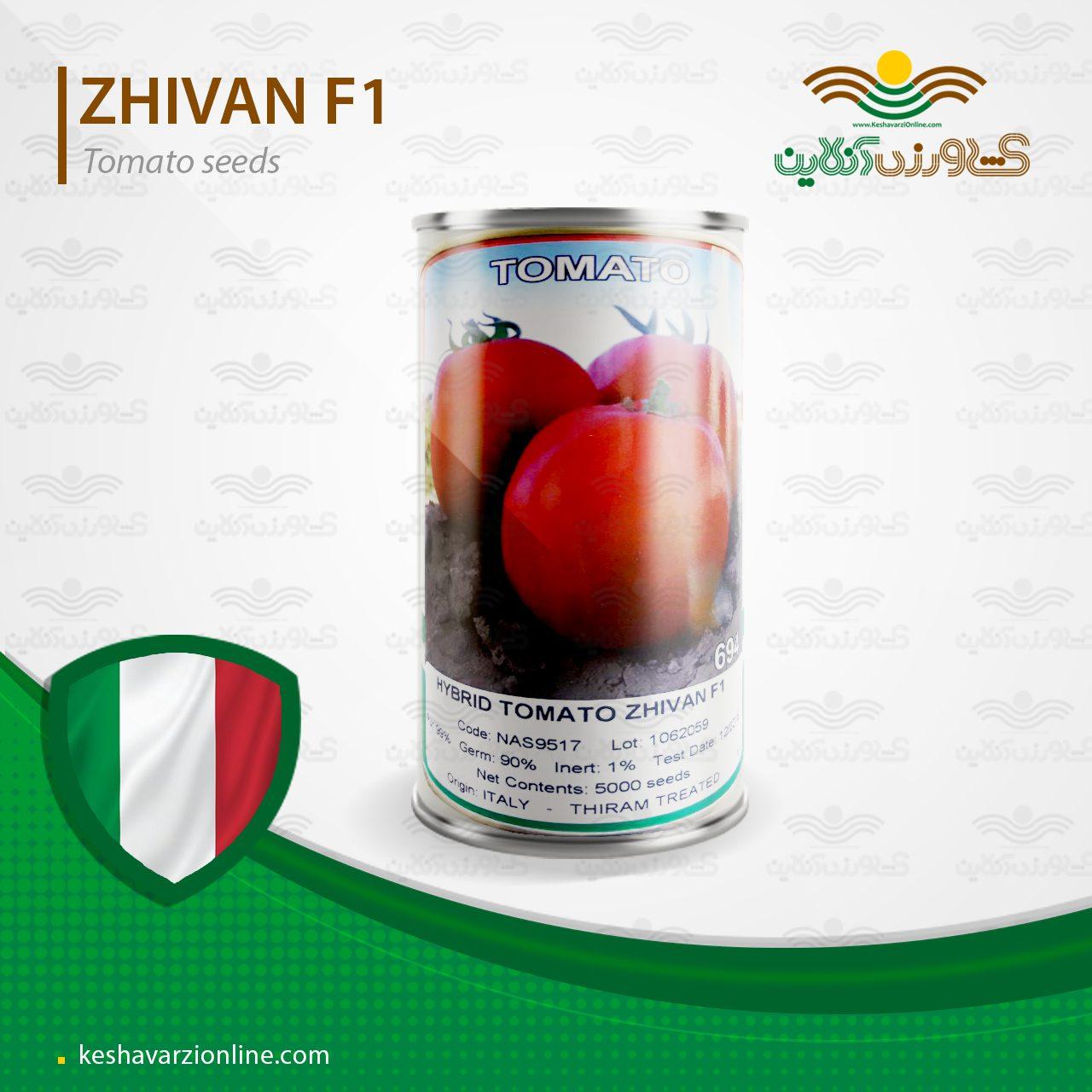 بذر گوجه فرنگی هیبرید ژیوان
