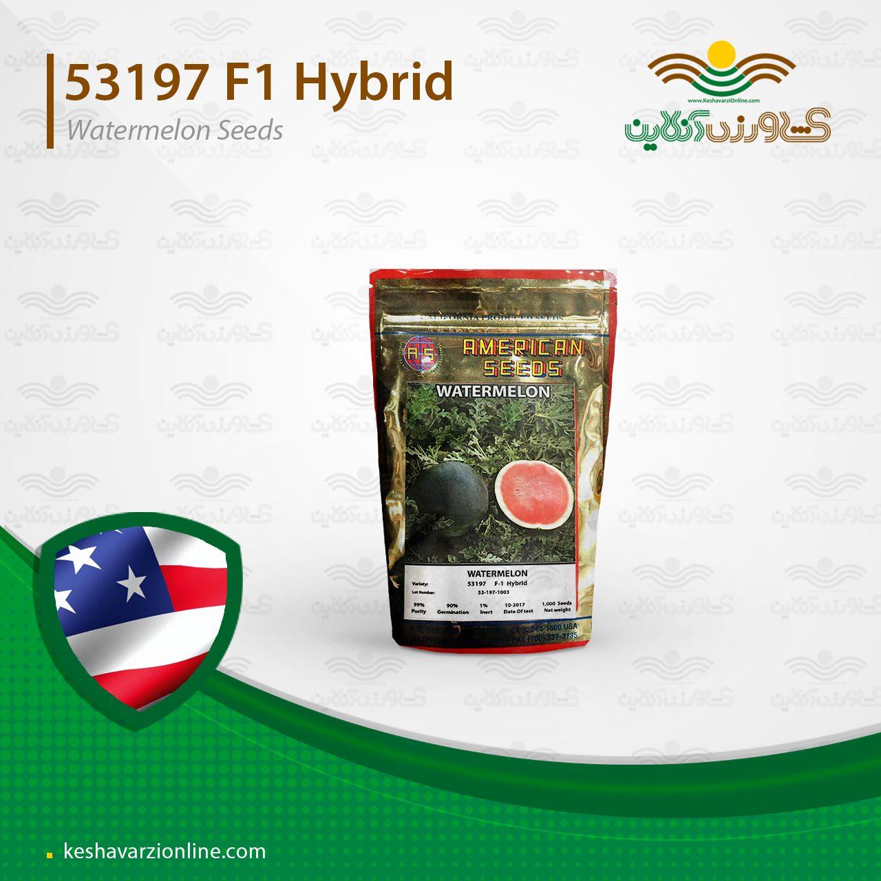 بذر هندوانه هیبرید شوگر بیبی گرد