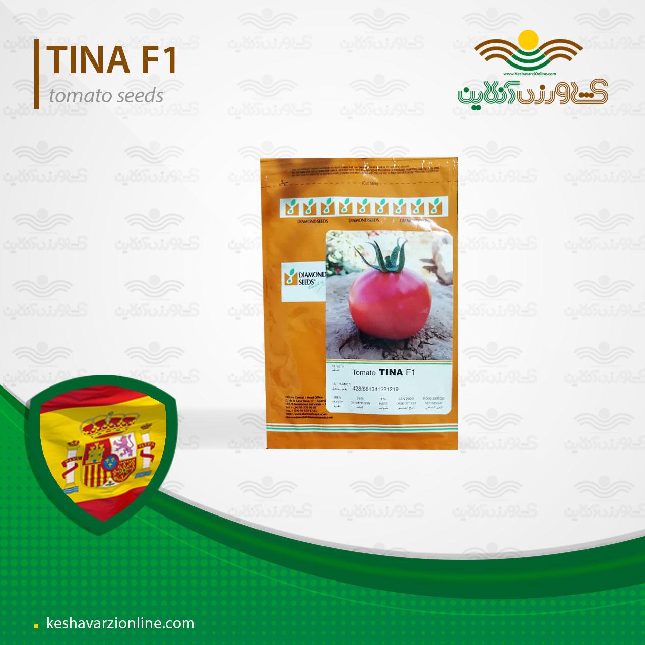بذر گوجه فرنگی گرد هیبرید پربار تینا اسپانیایی