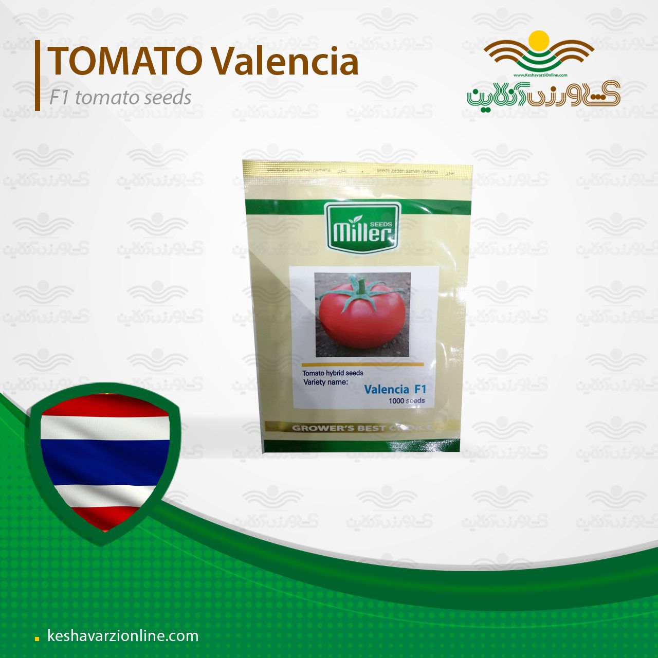 بذر گوجه فرنگی گلخانه ای والنسیا کاملا مشابه و جایگزین دافنیس