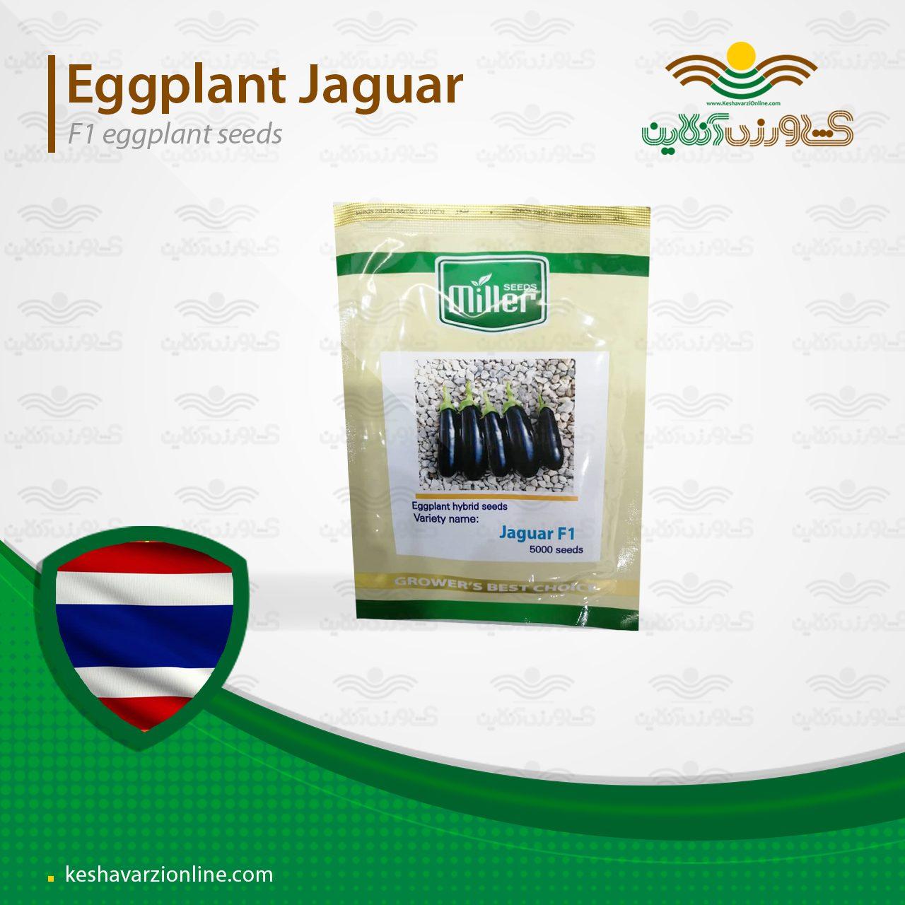بذر بادمجان قلمی هیبرید جگوار مناسب گلخانه و فضای باز