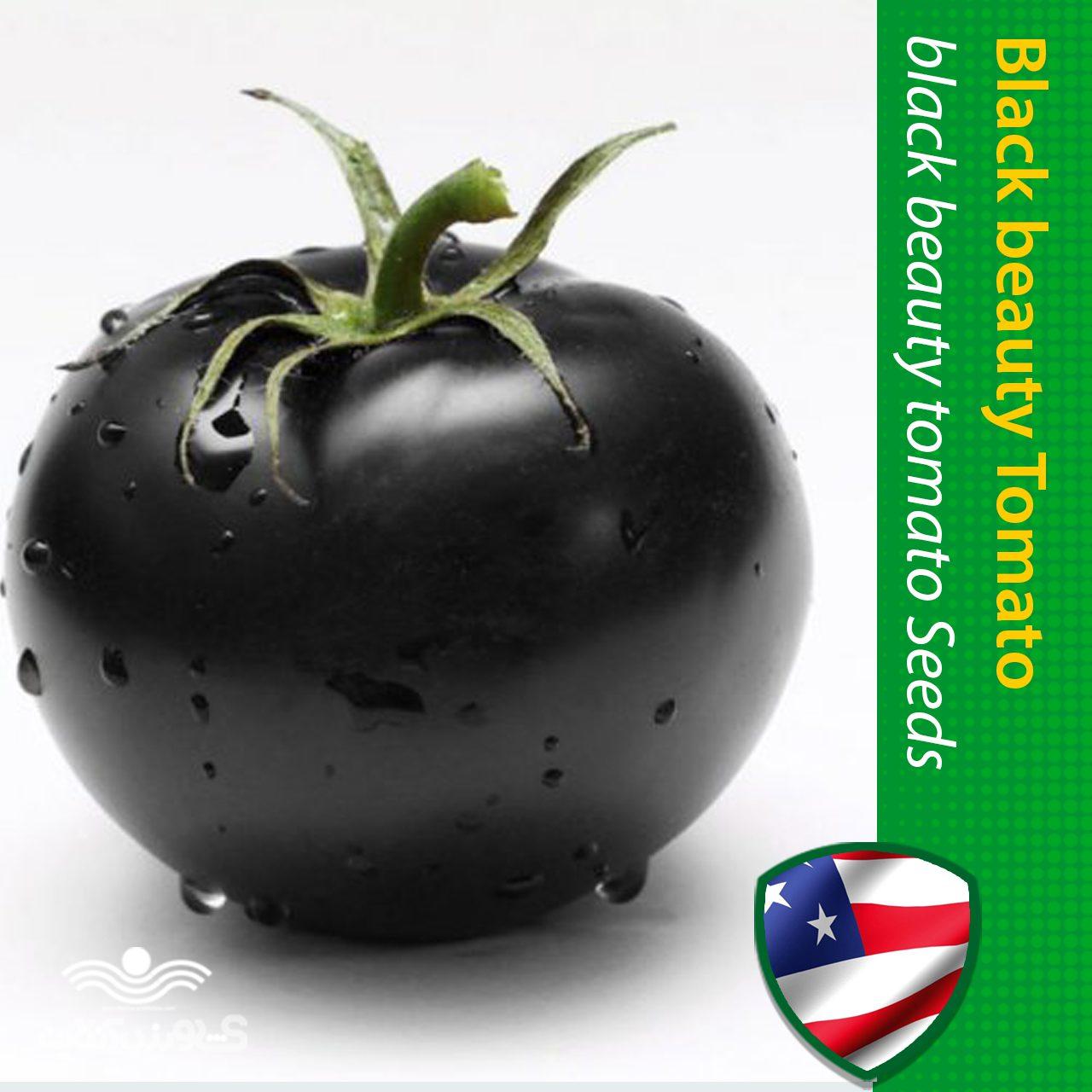 بذر گوجه بلک بیوتی آمریکایی