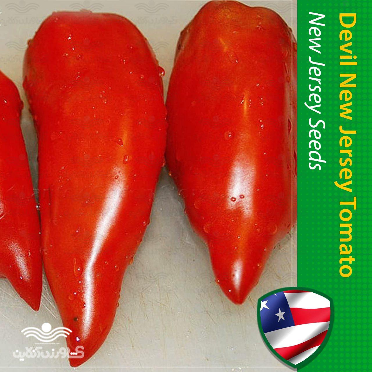 بذر گوجه فرنگی نیو جرسی آمریکایی اورجینال