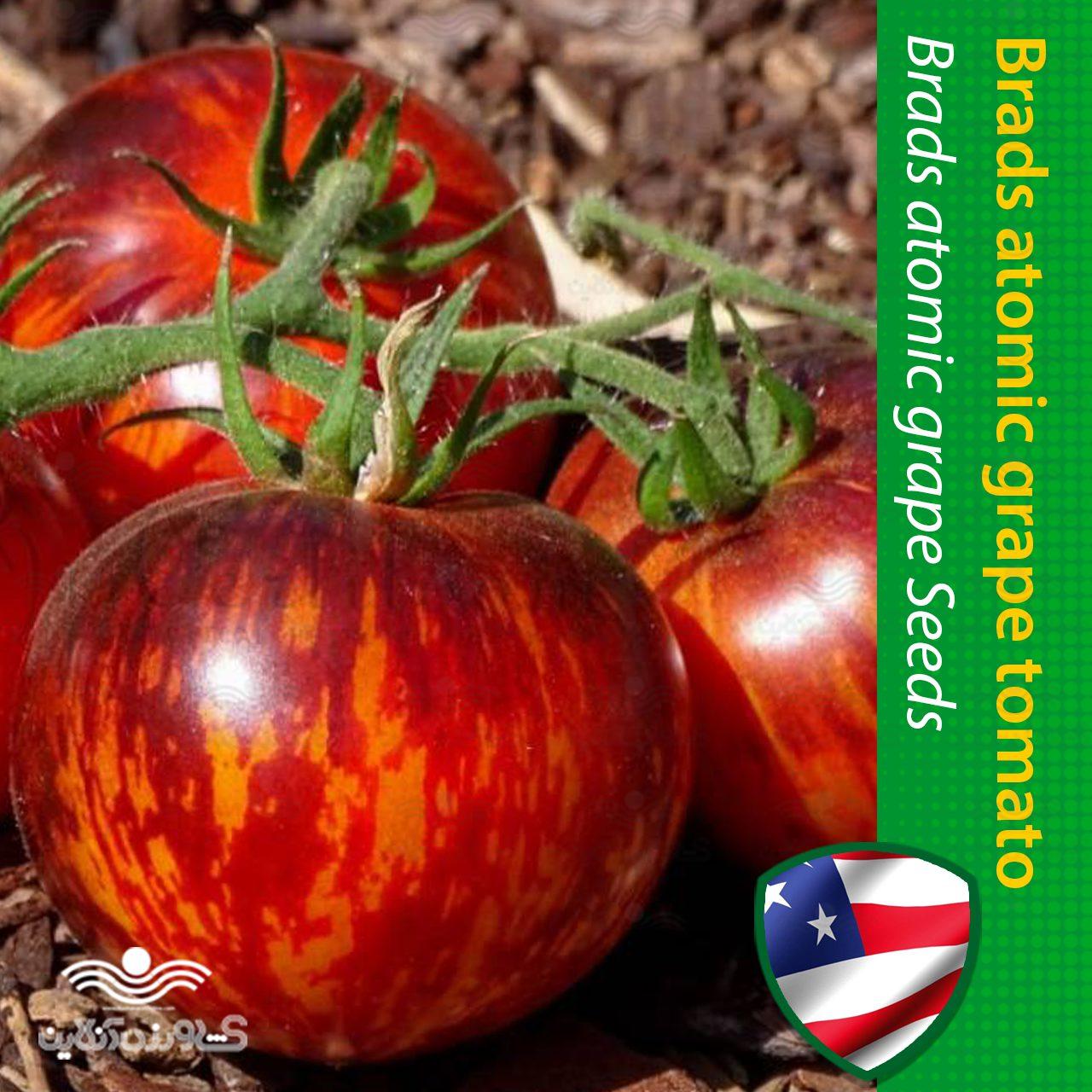 بذر گوجه فرنگی رنگین کمان اتمیک آمریکایی