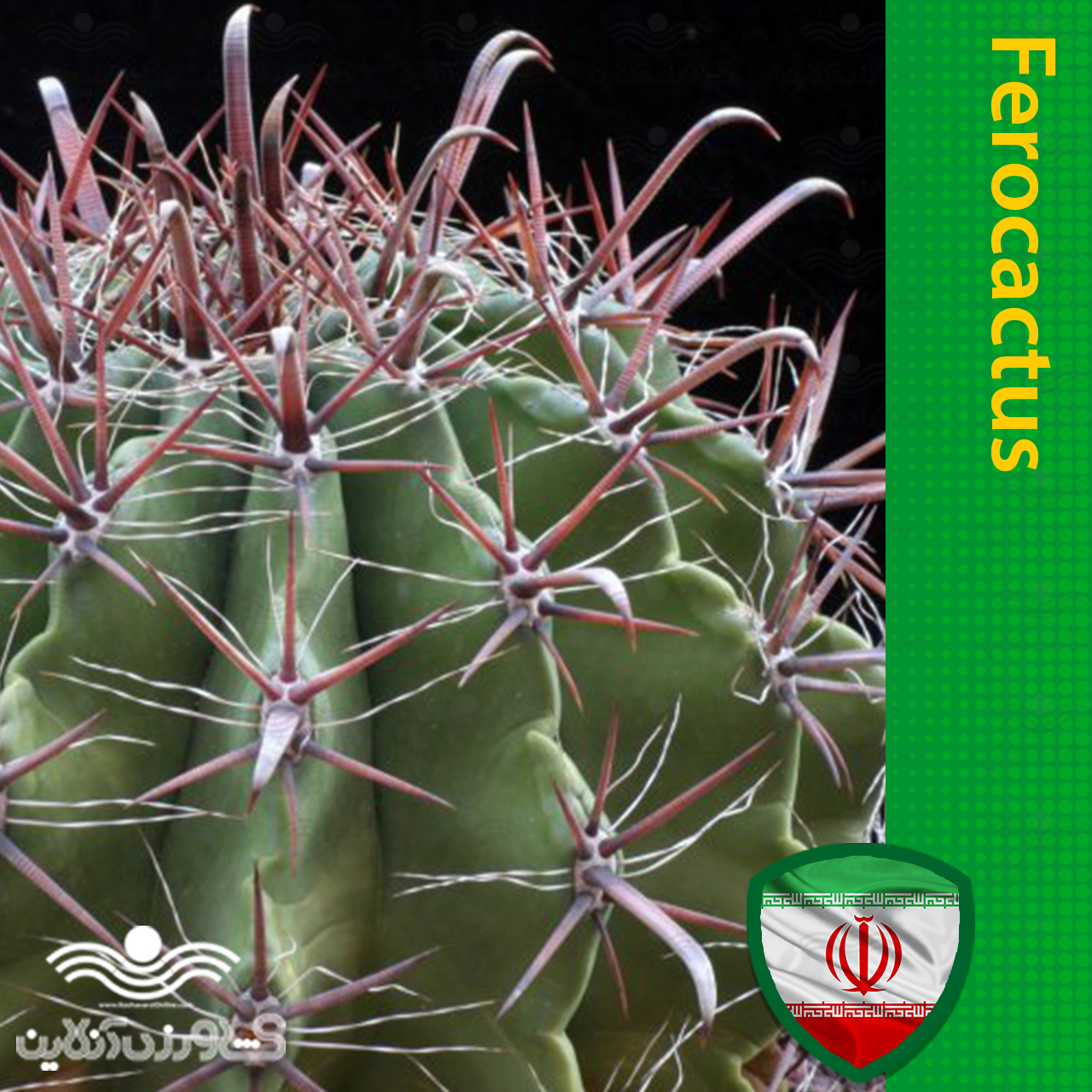 بذر فرو کاکتوس و روش تکثیر و نگهداری فرو کاکتوس