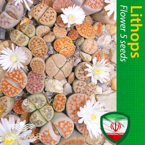 بذر لیتوپس و روش تکثیر و نگهداری لیتوپس