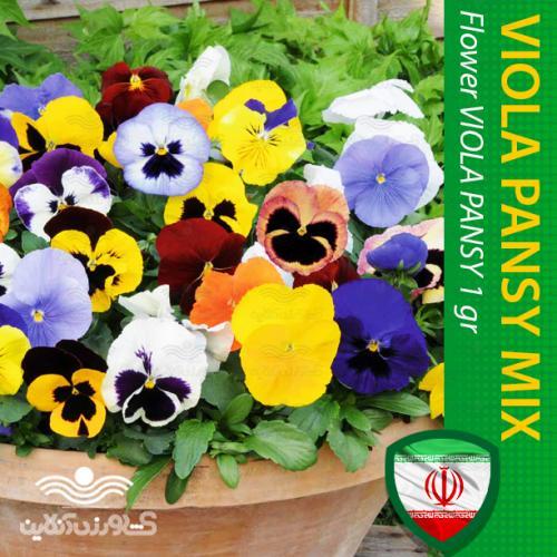 بذر گل بنفشه الوان میکس و روش کاشت آن