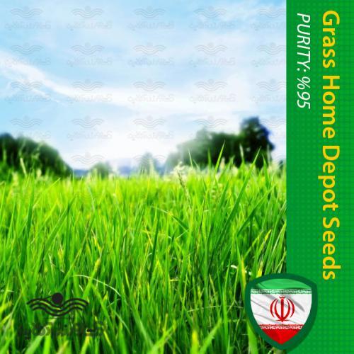 بذر چمن و روش کاشت چمن