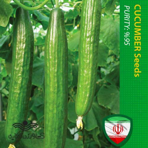 بذر خیار درختی و روش کاشت بذر