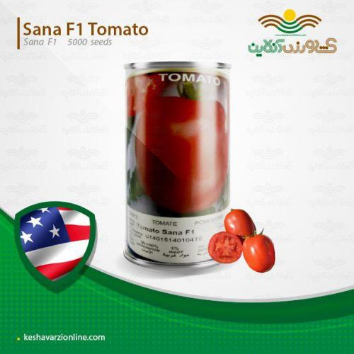 بذر گوجه فرنگی ثنا پربار مقاوم ارزان