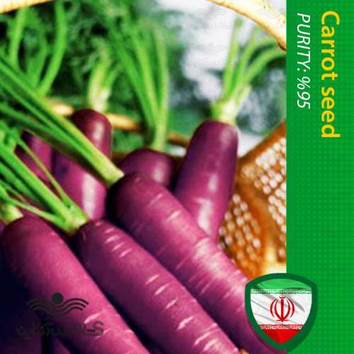 بذر هویج بنفش بهمراه روش کاشت هویج