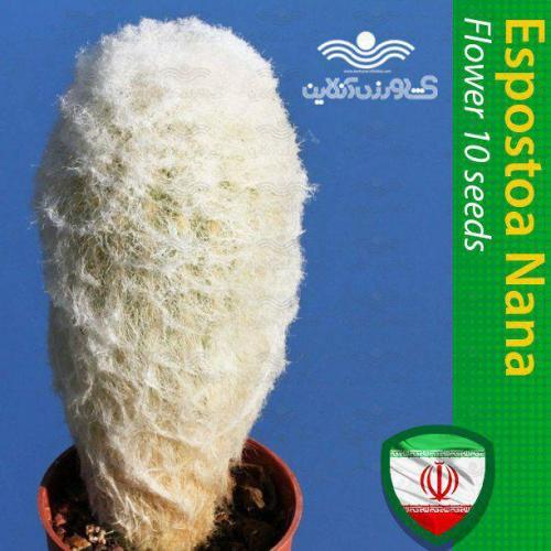 بذر کاکتوس اسپوستوا نانا و روش نگهداری کاکتوس