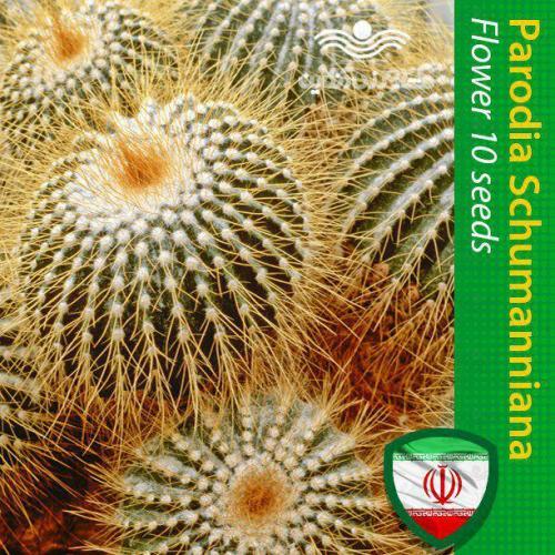 بذر کاکتوس پارودیا و نیازهای کاکتوس