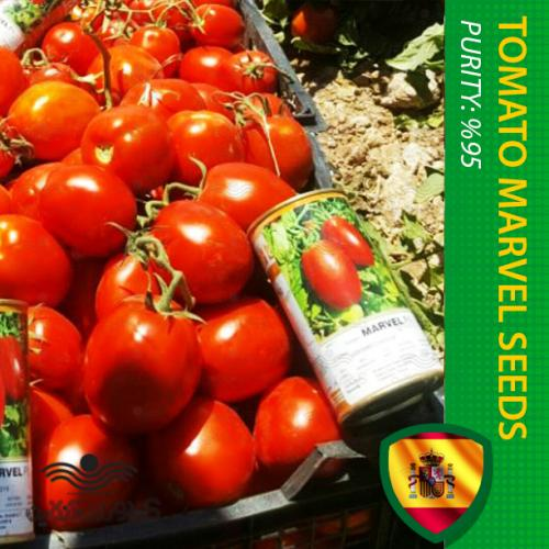 بذر گوجه فرنگی پربار اسپانیایی