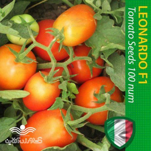 بذر گوجه لئوناردو در بسته های خانگی