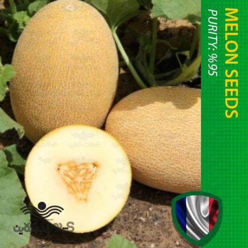 بذر ملون آناناسی فرانسوی