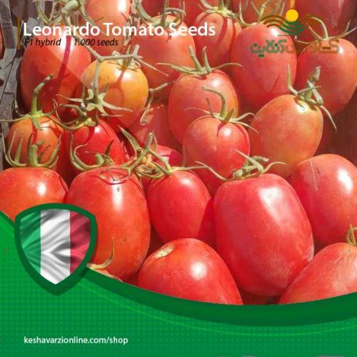 بذر گوجه لئوناردو 822 ایتالیایی