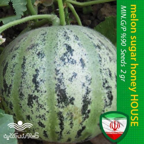 بذر طالبی سبز شیرین و عسلی خانگی