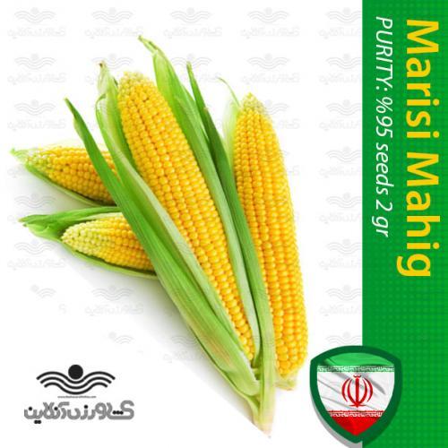 بذر ذرت شیرین خانگی و روش کاشت