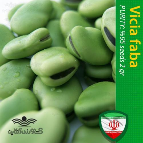 بذر خانگی باقلا