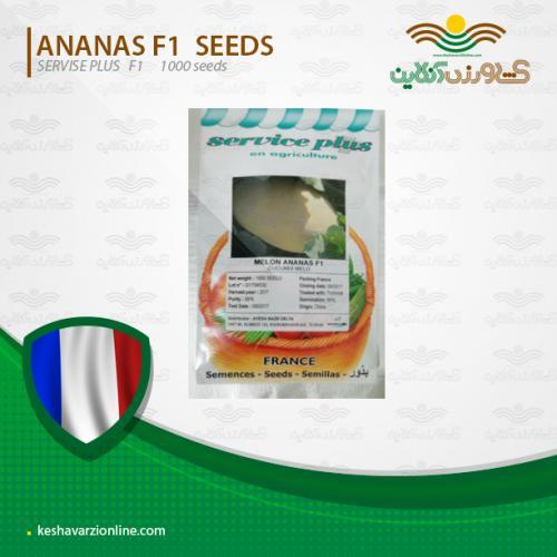 بذر ملون آناناسی سرویس پلاس فرانسه