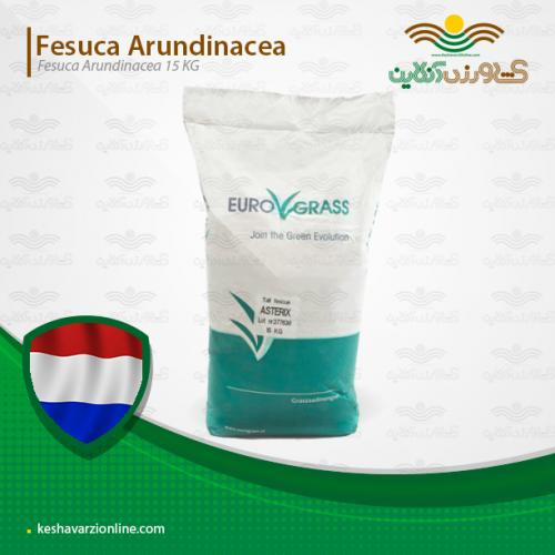 چمن فستوکا یورو گراس هلندی