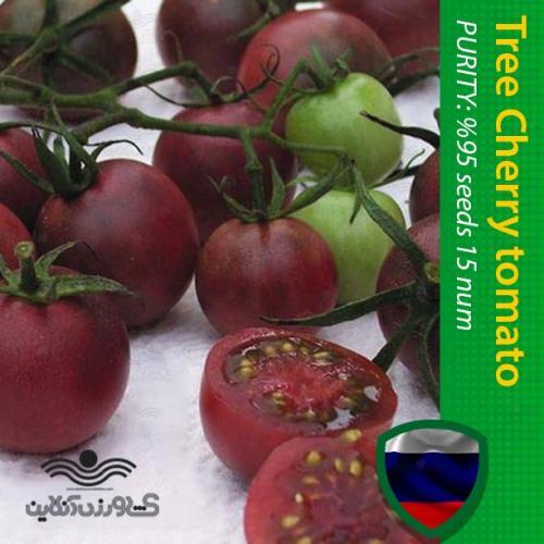 بذر خانگی گوجه چری ارغوانی درختی و نحوه کاشت