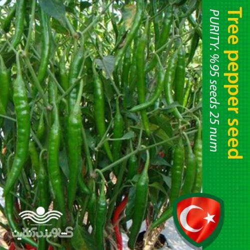 بذر فلفل سبز درختی خوش فرم و خوش خوراک