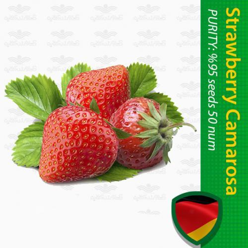 بذر توت فرنگی کاماروسا و روش کاشت توت فرنگی