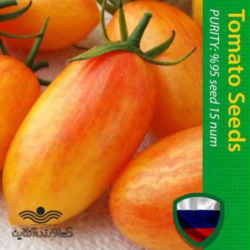 بذر گوجه زیتونی ببری زرد درختی