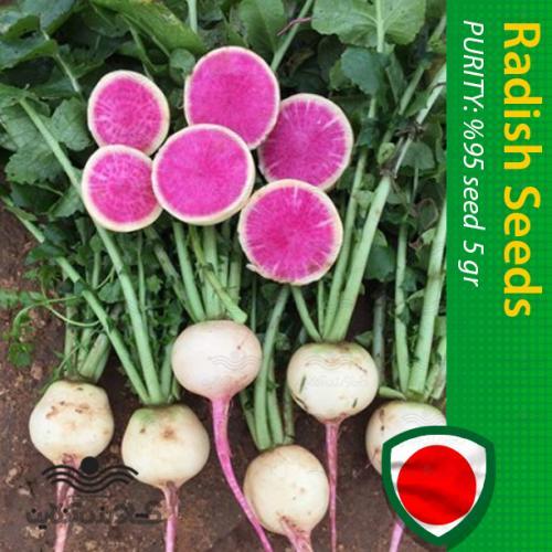 بذر ترب هندوانه ای و نحوه کاشت