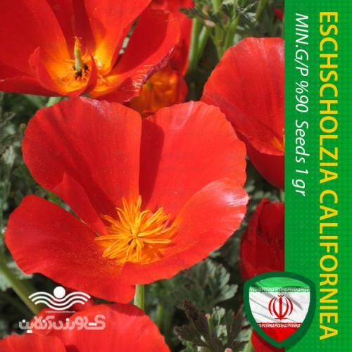 بذر گل شقایق کالیفرنیایی پا کوتاه قرمز