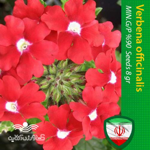 بذر گل شاهپسند پا کوتاه قرمز و روش کاشت گل شاهپسند پا کوتاه قرمز