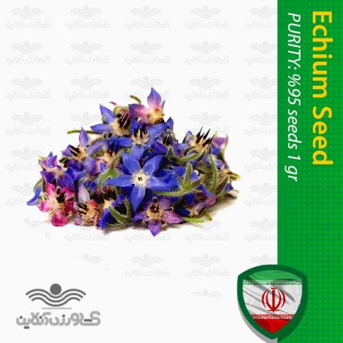 بذر گل گاو زبان ایرانی و روش کاشت