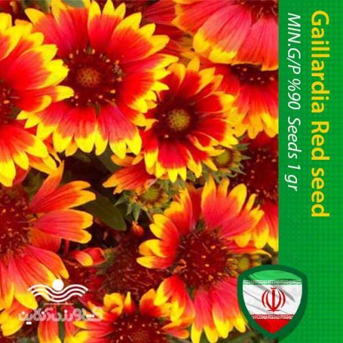 بذر گل رعنا زیبا پاکوتاه قرمز و روش کاشت