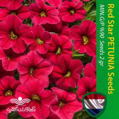 بذر گل اطلسی قرمز ستاره ای و روش کاشت