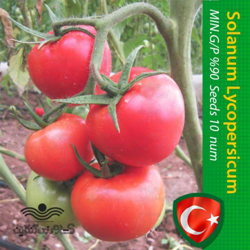 بذر گوجه درختی خوشه ای مخصوص کاشت خانگی